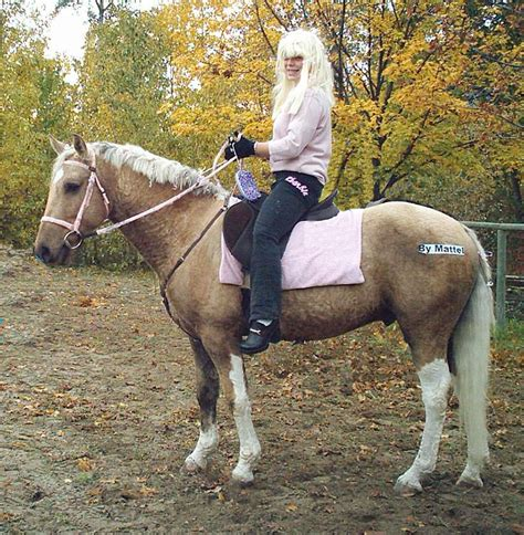 curly horse hypoallergenic testimonials yes hello writing website am