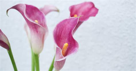 orchid arrangements the flower factory