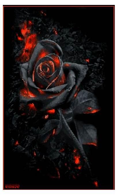 Dark Gothic Rose Picsart Roses Fantasy Flower