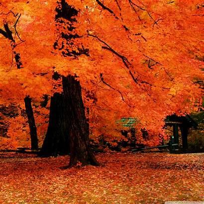 Fall Ipad Orange Autumn Background Desktop Wallpapers