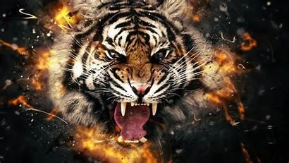 Tiger Face Animals Desktop Wallpapers Sfondi Tigre