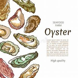Oyster Sea Shellfish Sketch, Pencil Drawing Set Stock ...