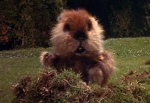 Explosions at W... Caddyshack Gopher