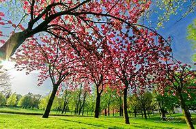Résultat d'images pour fleurs printemps