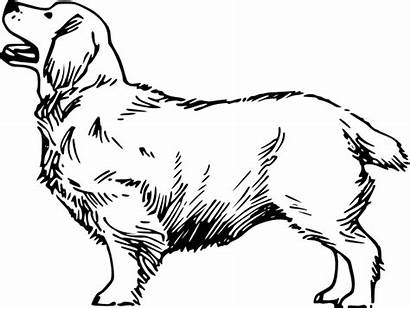 Dog Clipart Transparent Vector Clip Drawing Fur