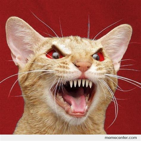 Meme Angry Cat - the gallery for gt harry potter quotes and sayings