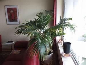 Yucca Palme Braune Blätter : braune bl tter seite 1 palmen ~ Lizthompson.info Haus und Dekorationen