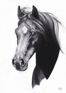 horse painting - Google Search | Horses in graphite ...