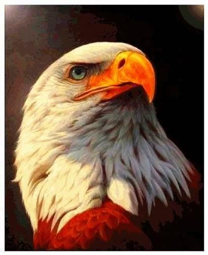 Gifs Aguia Burung Rajawali Aigle Dreamies Animales