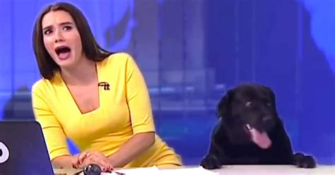 The Best News Bloopers Of 2017 Are Here And They're