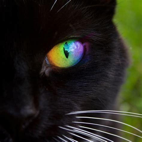 Rainbow Cat Eye By Digitalsprite On Deviantart