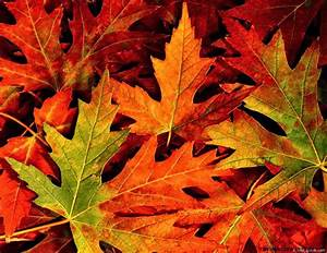 Fall Leaves Background Tumblr | Wallpapers Gallery