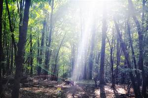 Divine Light  Into The Woods  Do The Trees Know Us