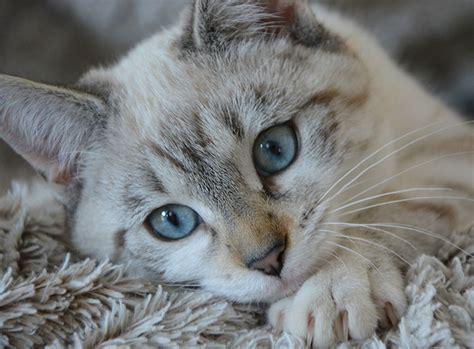 Katzen Halten Ausstattung by Was Kostet Eine Katze In Anschaffung Und Haltung