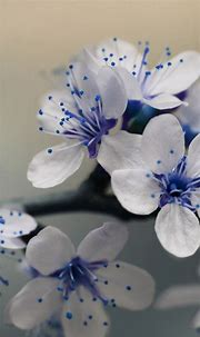 Download Our HD Beautiful Blue Flowers Wallpaper For ...