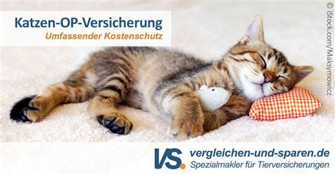 Versicherung Katze Vergleich