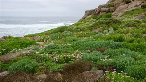 Central Coast California Pictures View Photos And Images Of