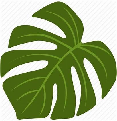 Monstera Leaf Clipart Plants Flowers Exotic Designer