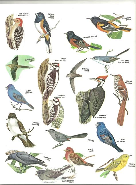 top 28 list of birds for scenery ellerslie lodge