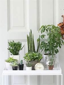 Grünpflanzen Für Innen : urban jungle bloggers wohnen mit pflanzen urban jungle pinterest ~ Eleganceandgraceweddings.com Haus und Dekorationen