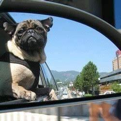 Mal Du Transport : comment viter le mal des transports chez le chien vid o voyager et jouer avec son chien ~ Medecine-chirurgie-esthetiques.com Avis de Voitures