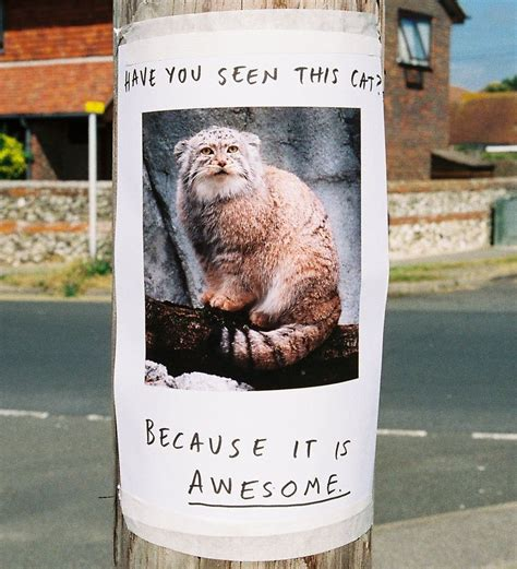 Lost Cat Meme - irl troll posters know your meme