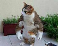 Cursed Cat Meme