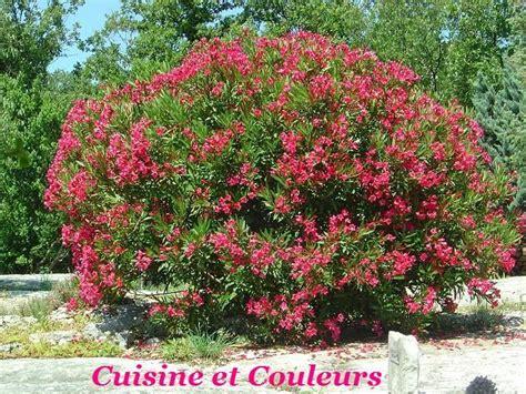 cuisine nouveau laurier quot au jardin quot photo de couleurs quot ardèche