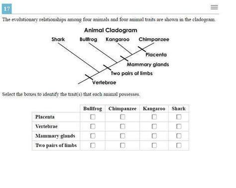Cladogram Worksheet Answers Homeschooldressagecom