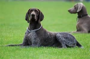 top 10 best dogs for bird herepup