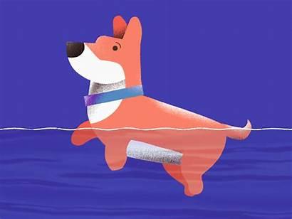 Swimming Corgi Dog Animation Noise Dribbble Frame
