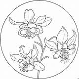 Coloring Circle Columbine Verzierung Orchideen Flowers Patterns Blumen Colorir Desenhos Supercoloring Circulo Easter Kolrosing Flores Embroidery Fiori Drawing Printable Colorare sketch template