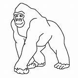 Gorilla Coloring Gorila Passeando Jungle Colorir Kleurplaten Bokito Tudodesenhos Desenho Printable Dschungeltiere Malvorlagen Ausmalbilder Animals Outline Gorillas Konabeun Cara Imprimir sketch template