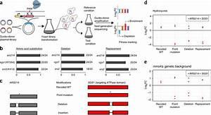 Guide Donor Genome