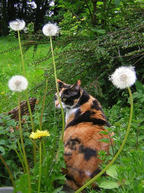 Furtive | Jardina in her garden | zenera | Flickr
