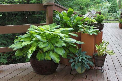 Container Gardening : Container Gardening Ideas