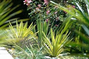 Plantes Exotiques Rustiques : plante exotique exterieur rustique woodwardia fimbriata ~ Melissatoandfro.com Idées de Décoration
