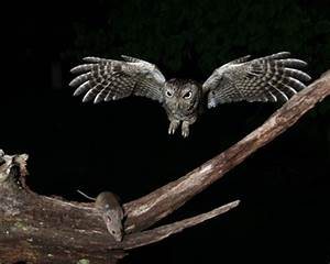 Lesson 11 The Screech Owl Who Liked Television - ThingLink