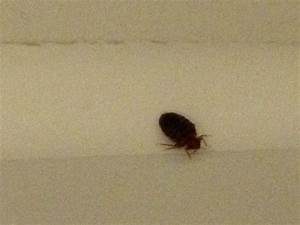 lima photos featured images of lima oh tripadvisor With bed bugs in ohio