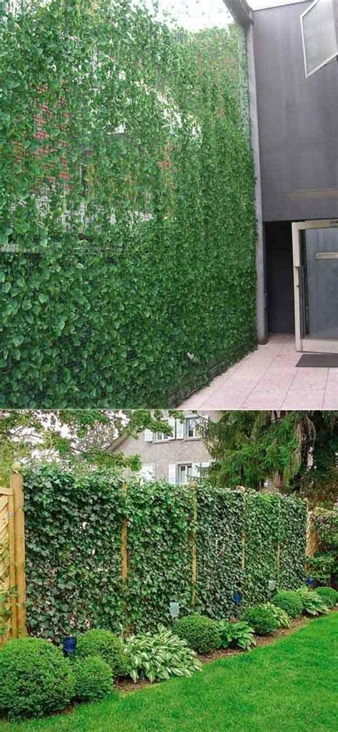 adding privacy to backyard best 25 ivy wall ideas on pinterest wall trellis vine trellis and lattice wall