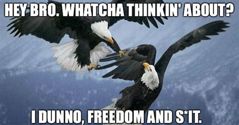 July 4th Memes - 10 funny 4th of july memes to laugh this independence day 2015 bored panda
