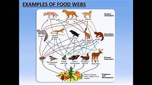 Food Webs Analysis Activity - Powerpoint