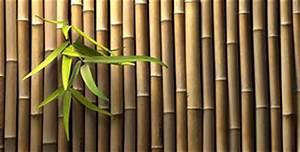 Garten Sichtschutz Günstig : bambus sichtschutz g nstig kaufen benz24 ~ Indierocktalk.com Haus und Dekorationen