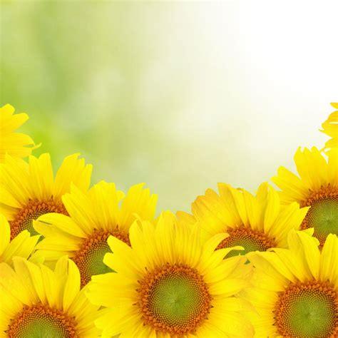 sunflower powerpoint template cpanjinfo