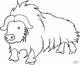 Buffalo Yak Coloring Pages Printable Himalayas Himalayan Cartoon Cow Wild Template Preschoolers Popular Getcoloringpages Coloringhome 973px 17kb 1200 sketch template