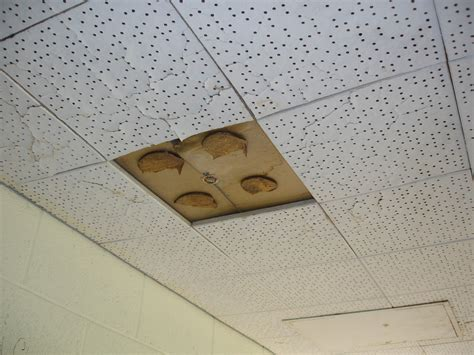 Asbestos Ceiling Tile Identification by Ceiling Tile Asbestos Adhesive Glue Pods Non Asbestos
