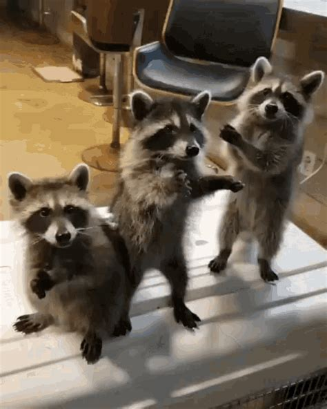 cute animals gif luvbat