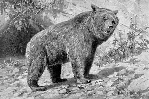 pecinski medved vikipedija slobodna enciklopedija
