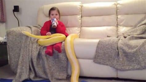 si鑒e repose genoux une fillette de 3 ans regarde la télé en caressant boa de 3 mètres qui se repose sur ses genoux
