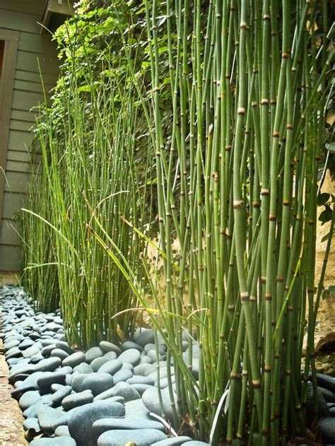 horsetail reed houzz